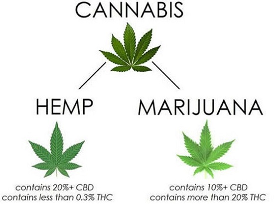Industrial Hemp Extract Manufacturing vs Marijuana